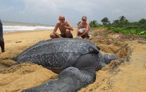 Самая крупная черепаха