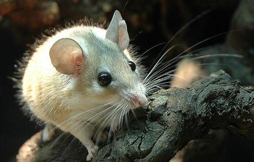 Защита деревьев от мышей