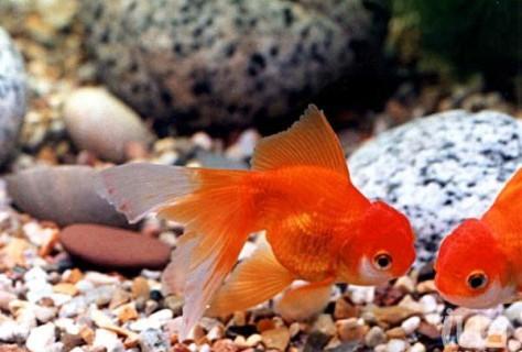 Слышат ли рыбы звуки