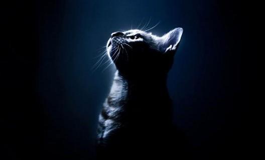 Почему кошка чешет за ушами