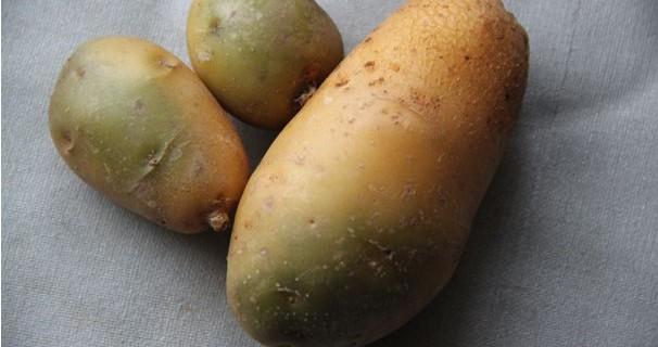 зелёная картошка