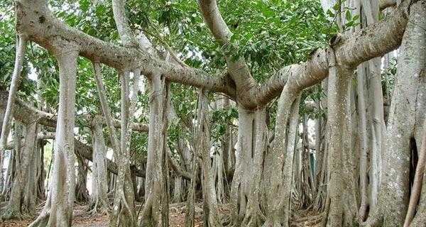 Самые глубокие корни