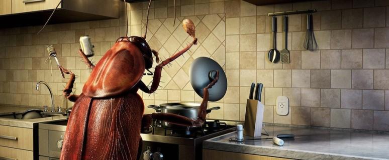таракан-на-кухне