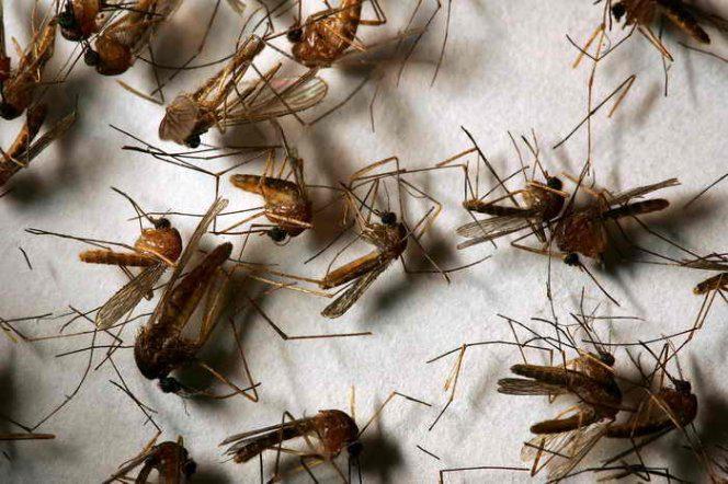 14 комары