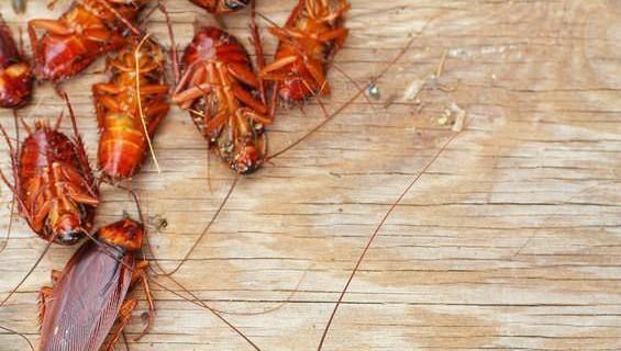Как избавиться от тараканов без химикатов?