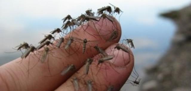 Komarov-ubijc-otpravili-voevat-s-komarami