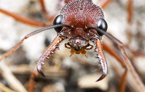 Как избавиться от укусов муравьев