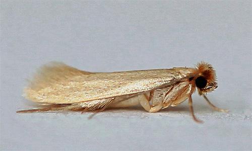 platyanaya-mol-i-ee-foto-2