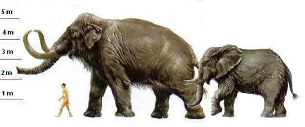 Вес мамонта